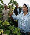 President Gloria Macapagal-Arroyo pick some ripe Jatropha fruits ready for harvest (02).jpg