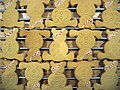 Pudsey shortbread for children in need, November 2006.jpg
