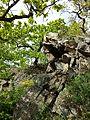 Pulkautal westlich von Pulkau sl2.jpg