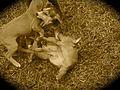 Puppies5.jpg