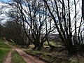 Quantock walk near head of Triscombe Combe - geograph.org.uk - 124921.jpg
