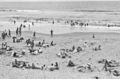 Queensland State Archives 1132 Beach scene Maroochydore January 1931.png