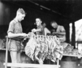 Queensland State Archives 4204 Stringing tobacco leaf c 1938.png