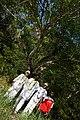 Quilombo dos Palmares é palco de reflexão e festa no 20 de novembro (30369055303).jpg