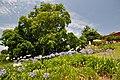 Quinta das Vinhas ^ Cottages, Estreito da Calheta, Madeira, Portugal, 27 June 2011 - Main house area - panoramio (19).jpg