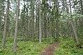 Rönnskärs udde naturreservat, skog.jpg