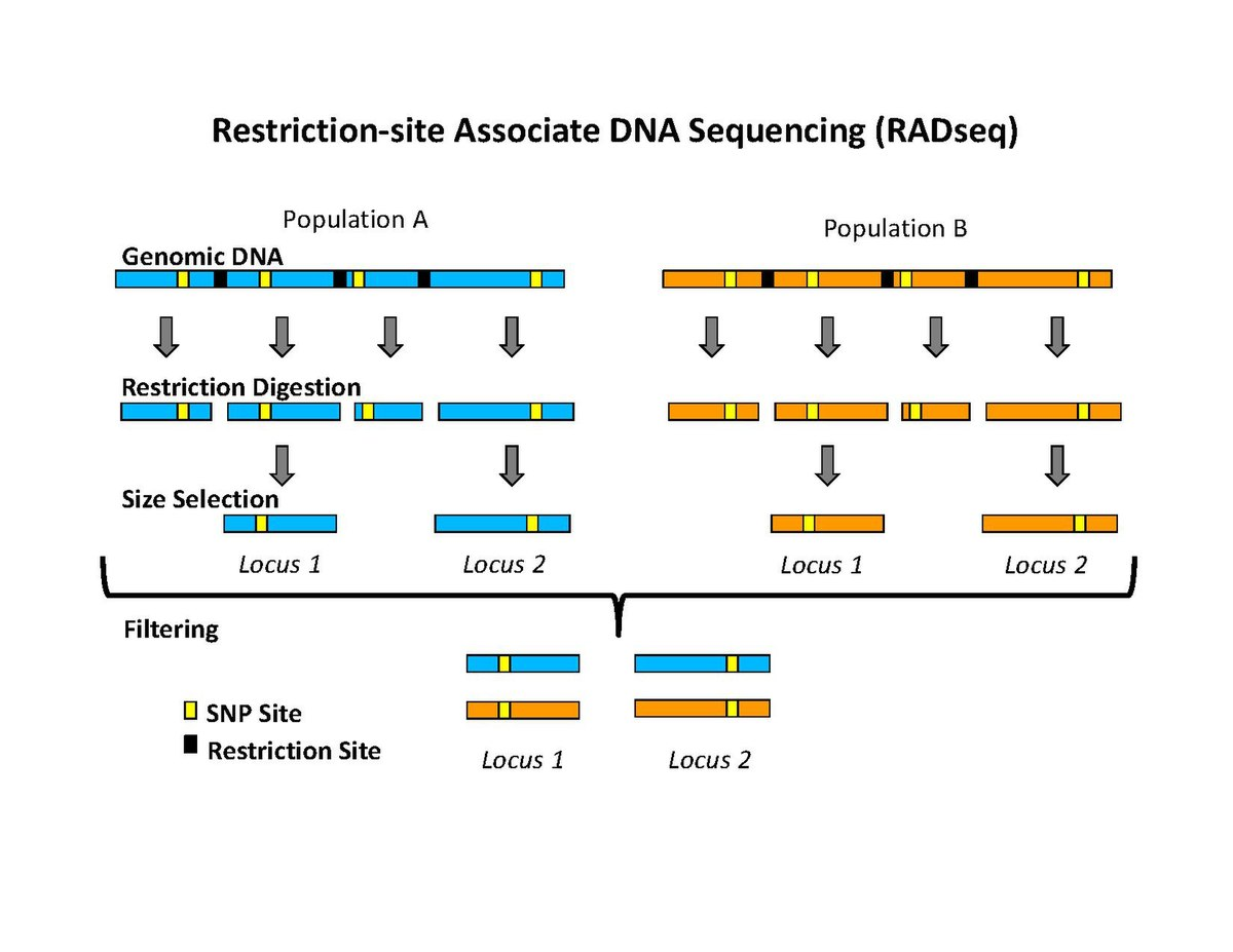 Restriction Site Associated Dna Markers