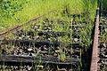 Rails abandonnés près de Mauron 01.JPG