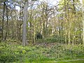 Ram Wood, Roundhay Park (geograph 5435451).jpg