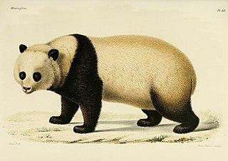 pandas pour les nuls