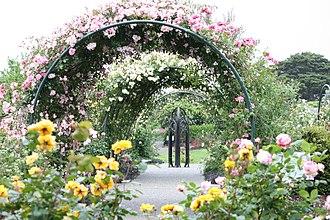 Auckland Botanic Gardens - Reflective Rose Garden showcasing climbing roses