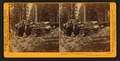 Remains of the Father of the Forest, Mariposa Grove, Mariposa County, Cal, by Watkins, Carleton E., 1829-1916 2.png