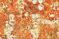 Restes de coquillages et d'algues sur un voile de quille (9).JPG