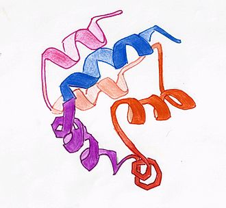 Death effector domain - Tertiary structure of DED in FADD protein