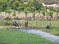 River Nile 09.jpg