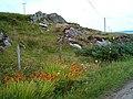Roadside flora - geograph.org.uk - 216016.jpg