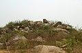 Rock formations at Miyapur.JPG
