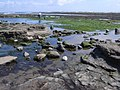 Rock pools and sea weed at Robin Hood's Bay - geograph.org.uk - 818313.jpg