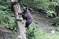 Romania bear (42350166140).jpg