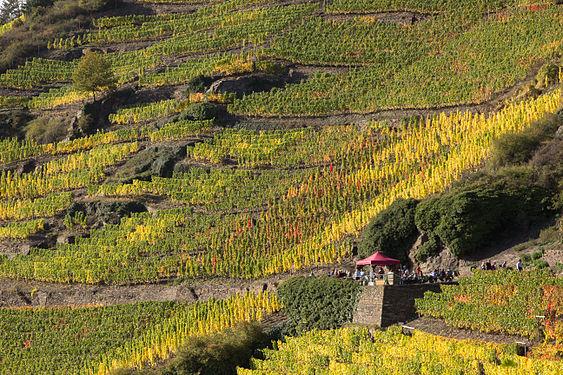Rotweinwanderweg bei Mayschoss 1.jpg