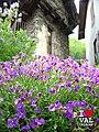 Roure Roreto - Fleurs de montagne.jpg