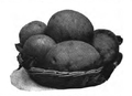 Roze fig. 83.png
