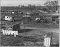 Sacramento, California. Fifty to sixty families pay $1 per month ground rent. No sanitary facilities . . . - NARA - 521790.tif