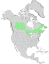Salix pyrifolia range map 0.png