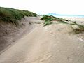 Sand dunes at Newborough Warren - geograph.org.uk - 226165.jpg