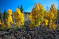 Scenic fall colours along Utah Hwy 14 - emrging from a 1000 year old lava flow - (22393345018).jpg