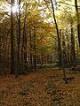 Schaumburger Wald 2015-10-31 - BA312890.jpg