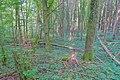 Schleitheim Auenwaldreservat Seldenhalde Bild 2.jpg