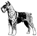 Schnauzer (PSF).png