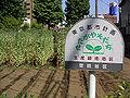 Seisanryokuchi 05x2632s.jpg