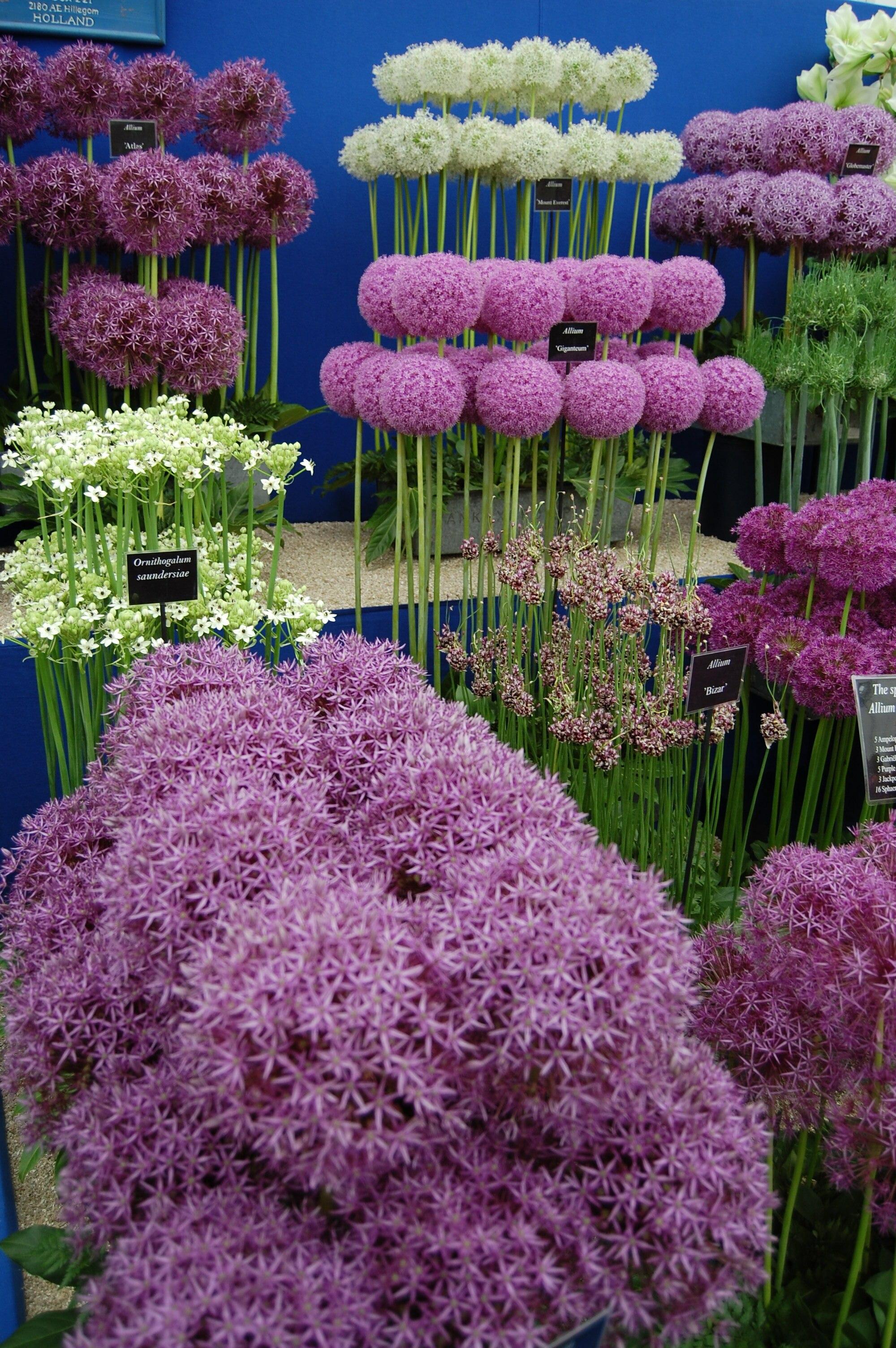 Hsmall Edible Garden Raised Bed Plan