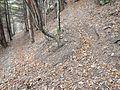 Sentier - panoramio (3).jpg