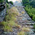 Sentiero Alta Versilia - Tappa 4 - Vista su antica mulattiera pavimentata.jpg