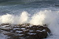 Shark Island at Kurnell Point, Cronulla NSW Australia 02.JPG