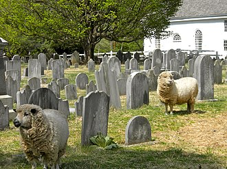 St. Peter's Church in the Great Valley - Image: Sheep at St Peters