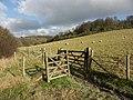 Sheep pasture, Wormsley Estate - geograph.org.uk - 110118.jpg
