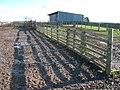 Sheep pens and barn on Penmanshiel Moor - geograph.org.uk - 352087.jpg
