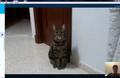 Sheldon mi gato.png