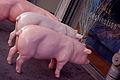 Shop like a pig (3227088155).jpg