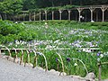 Shuzenji Rainbow Town 2003-06-20 03.jpg