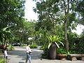 Singapore Zoo 3.JPG