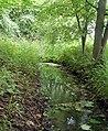 Small brook beside canal - geograph.org.uk - 1303544.jpg