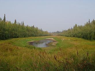Yukon Flats - Small hidden lake on Yukon Flats