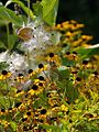Small yellow black flowers on grass.jpg