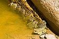 Snake Gorge (3).jpg