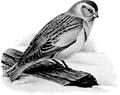 Snowflake-Birdcraft-0219-28.png